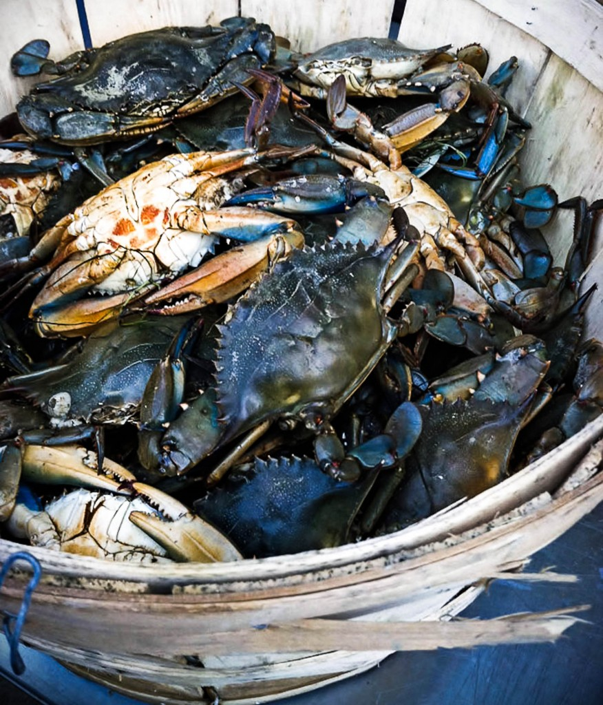 Fresh Blue Crabs