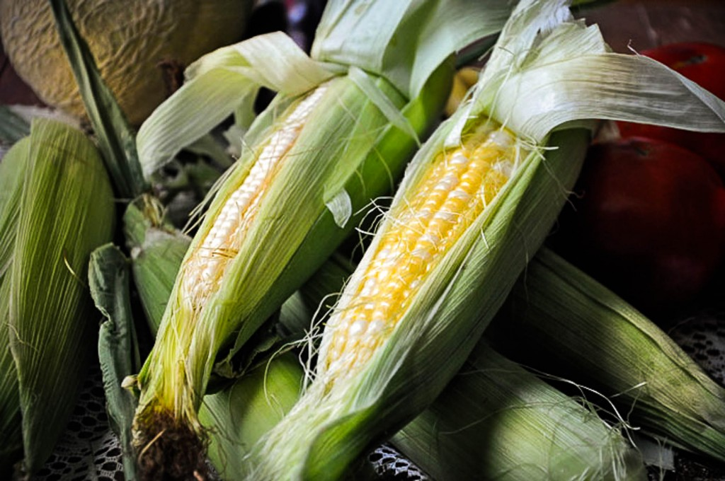 kentucky-sweet-corn