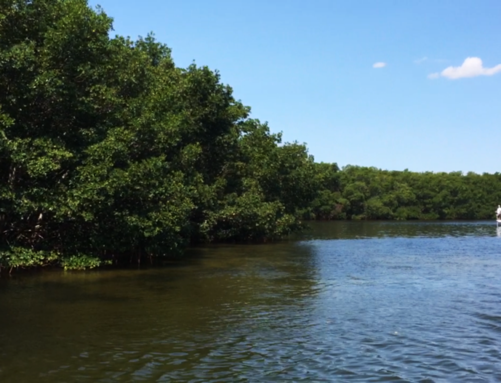 Transcript for M is for Mussels and Mangroves